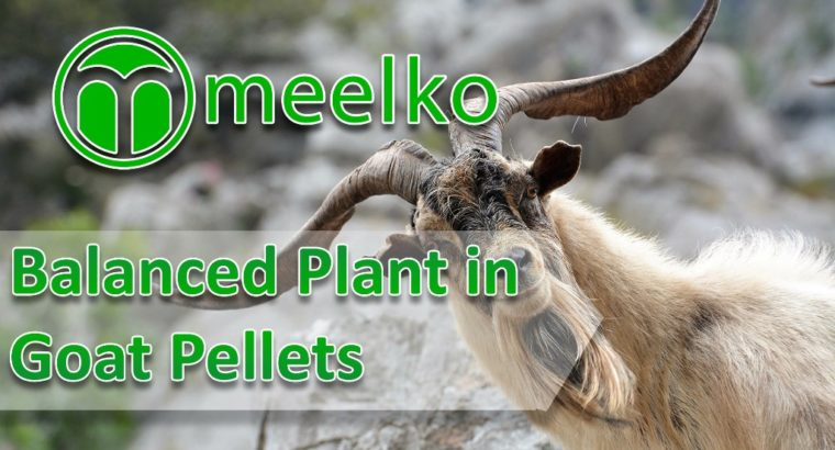 Balanced Plant in Palm Shell Pellets. Buy Now!