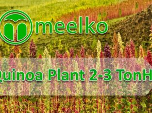 Quinoa Plant 2-3 TonH. Buy Now!