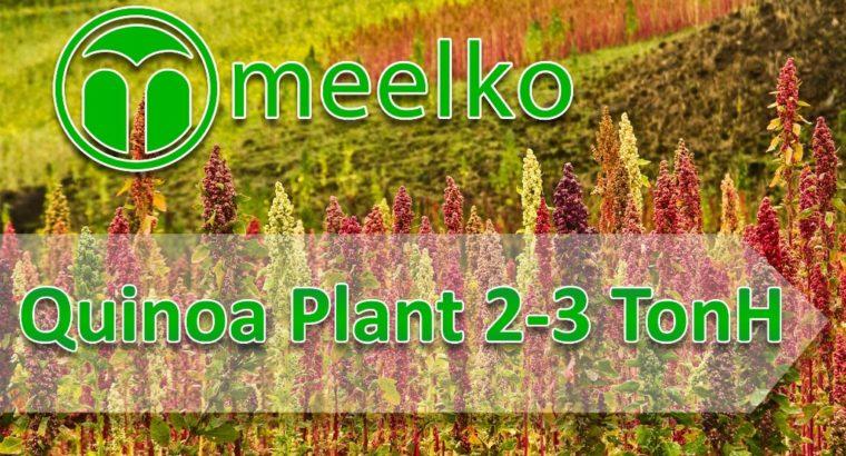 Quinoa Plant 2-3 TonH. Buy Now!