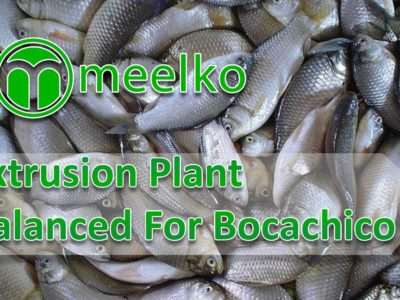 Balanced Extrusion Plant For BOCACHICO